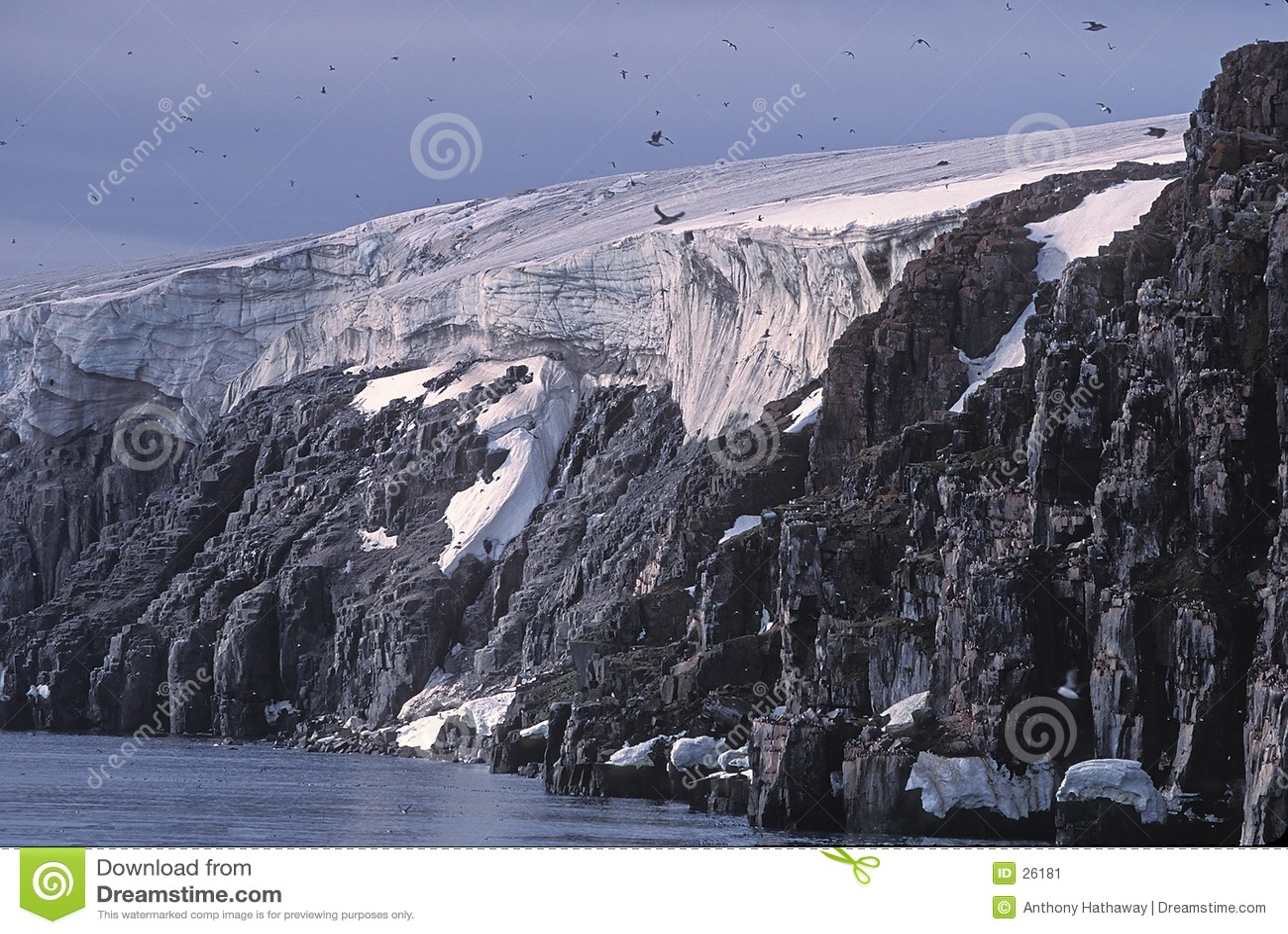Gletscher, Vogelklippen und murres