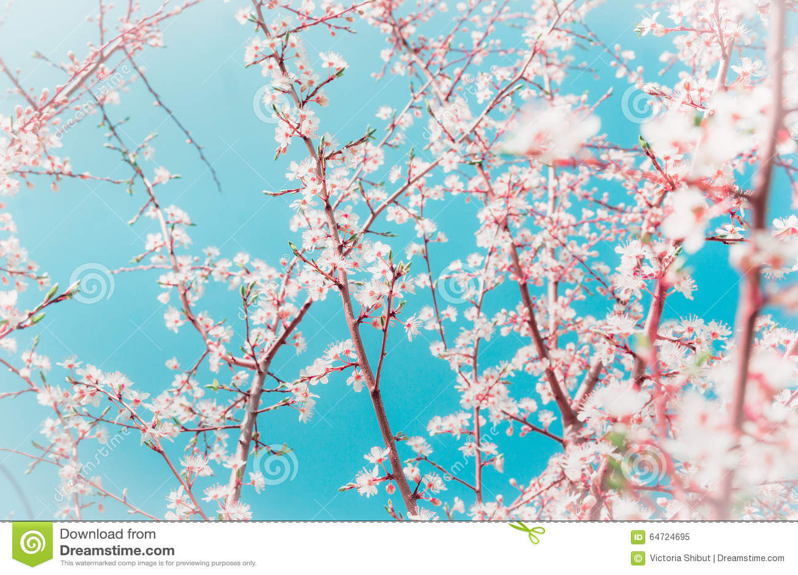 Gli alberi da frutto della primavera si ramifica con i for Alberi da giardino con fiori