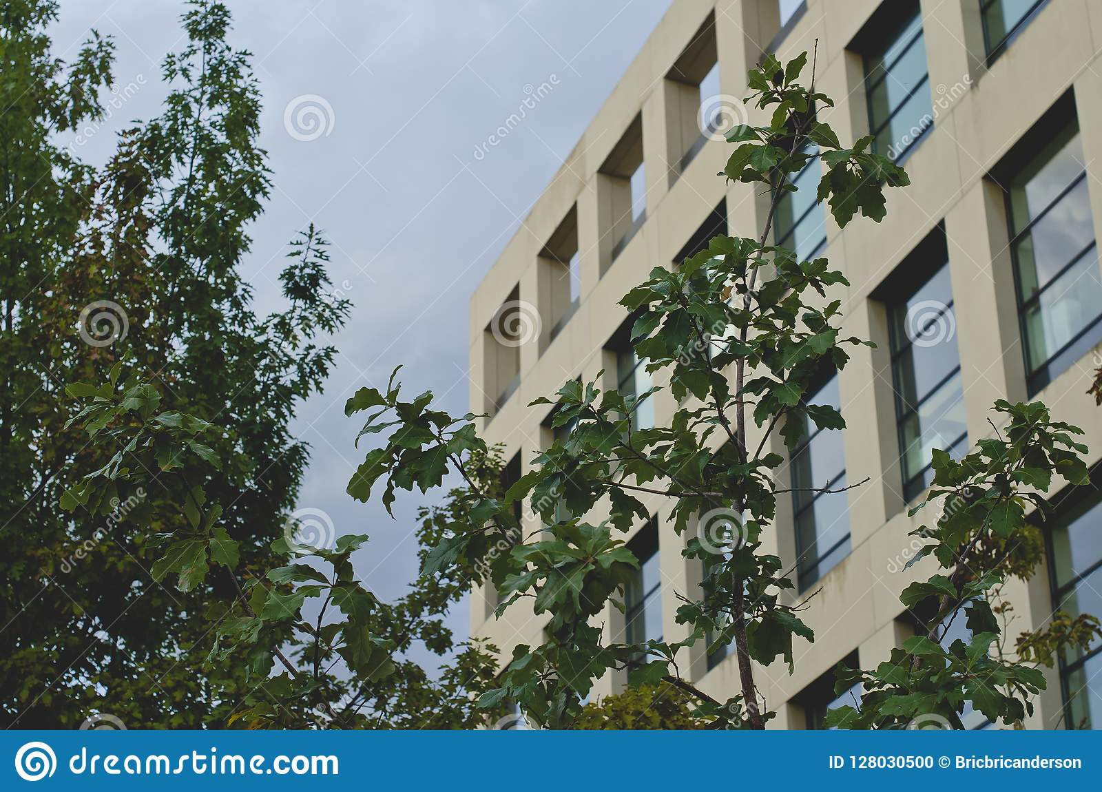 Gli alberi davanti alla biblioteca quadrata