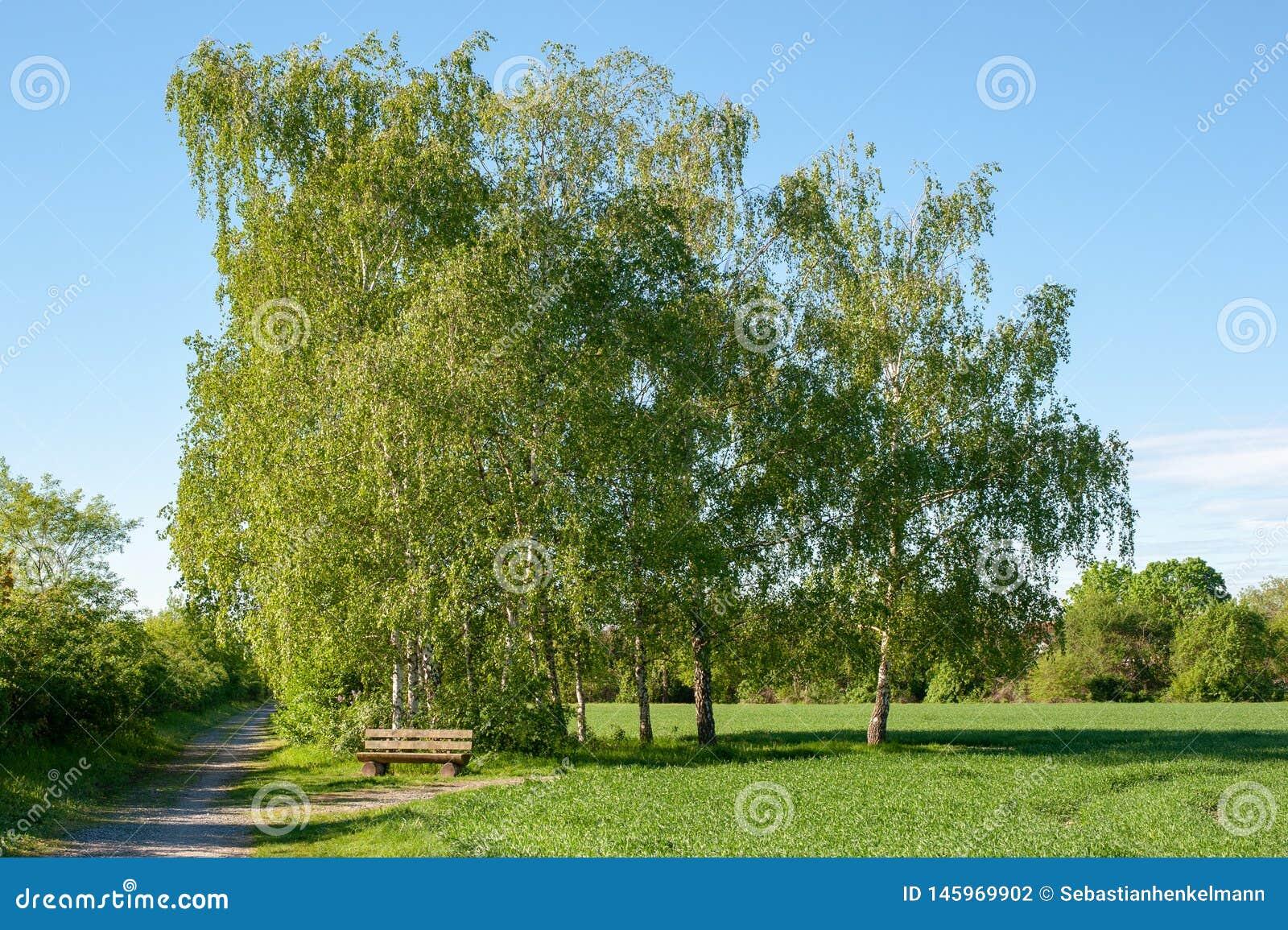 Gli alberi del banco sistemano