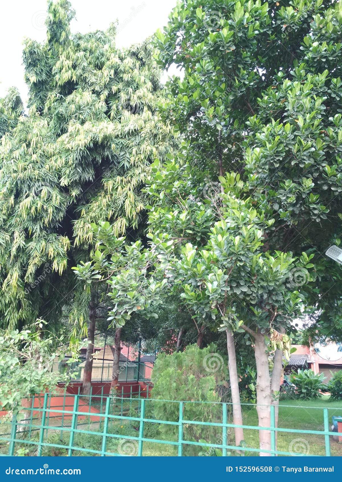 Gli alberi hanno fissato in una frontiera