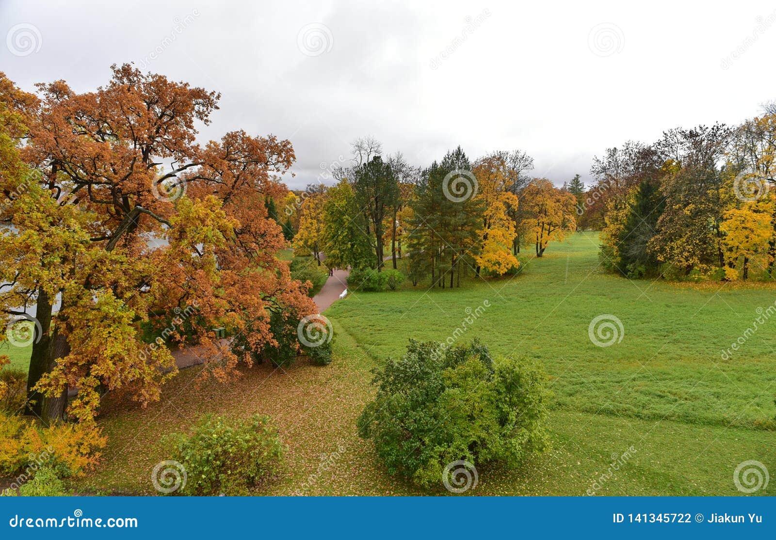 Gli alberi rossi e gialli sono sull erba verde