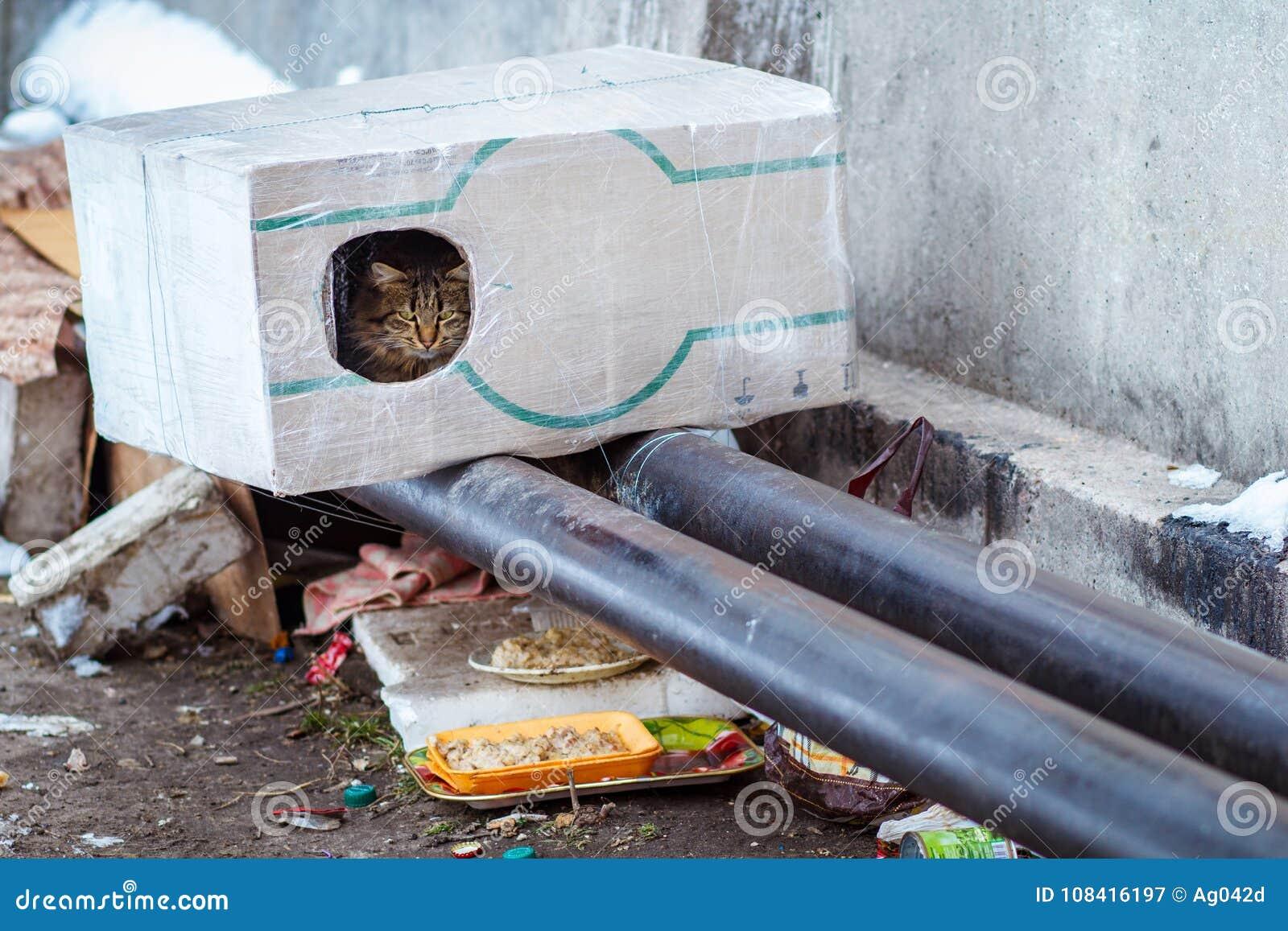 Gli animali smarriti nellinverno gatto senza tetto che si siede su