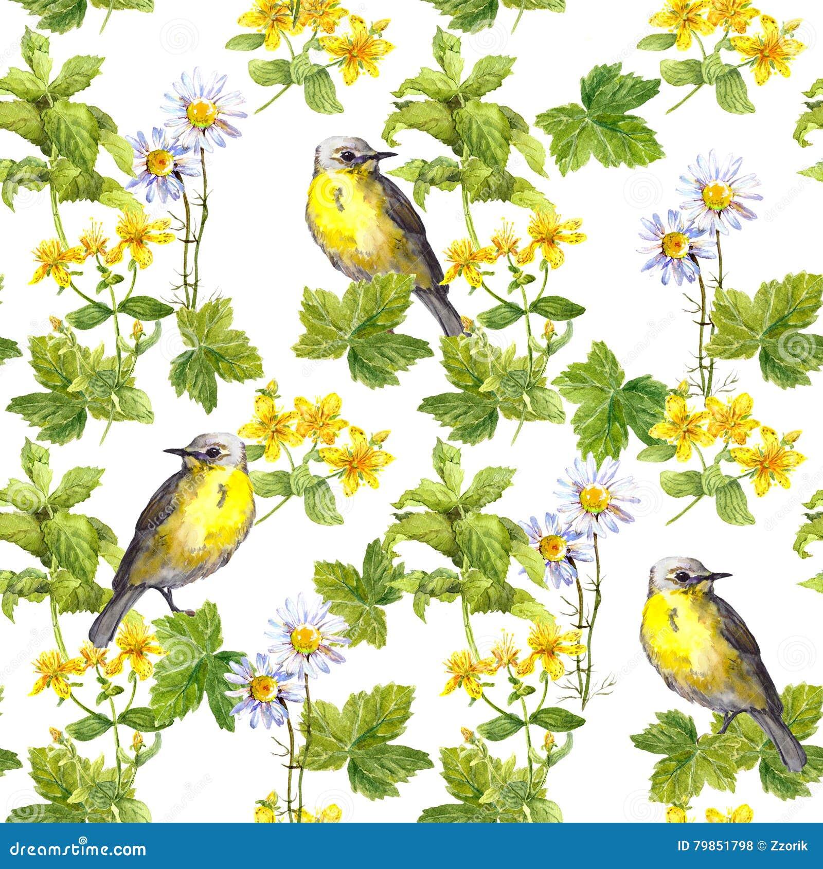 Gli uccelli della primavera prato fiorisce erba - Primavera uccelli primavera colorazione pagine ...