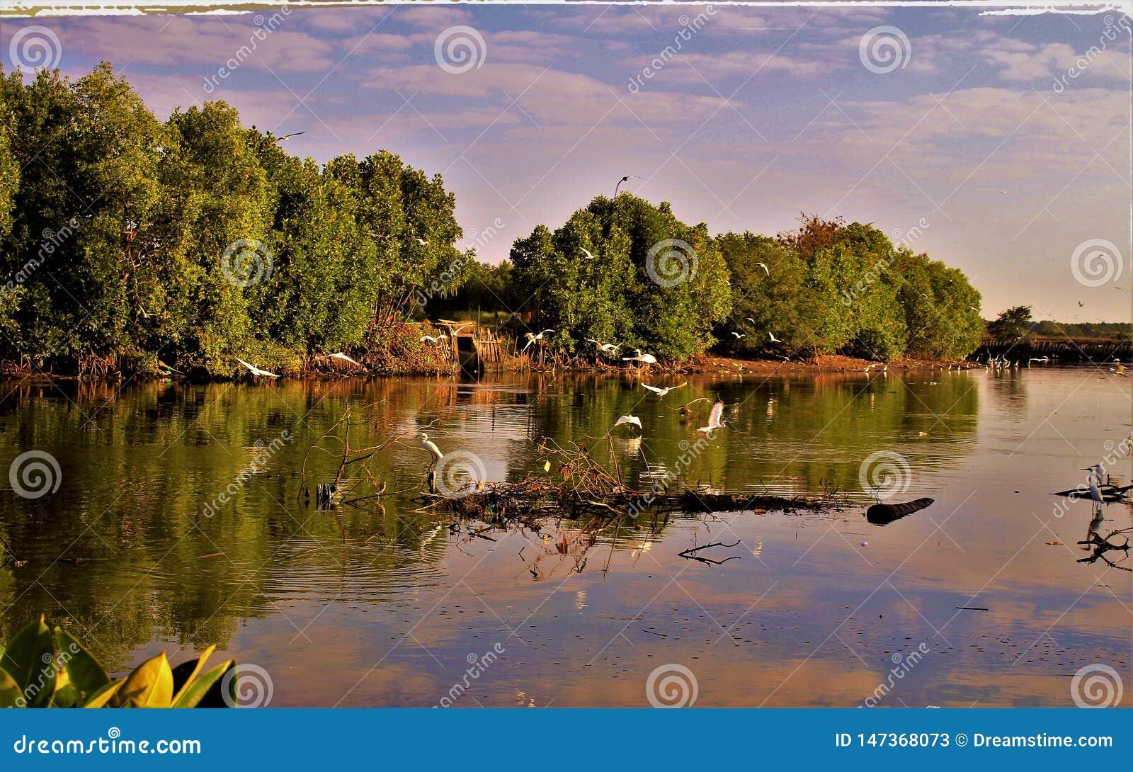 Gli uccelli di volata in mezzo al bello lago