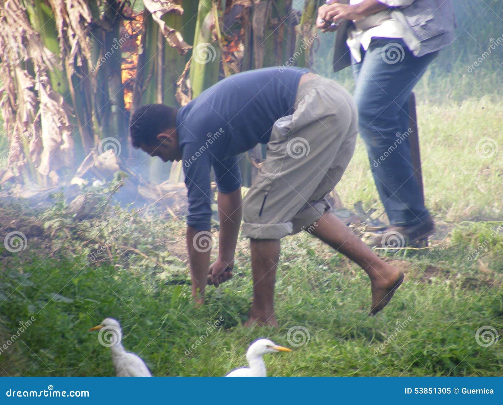 Gli uomini dell agricoltore nell usura tradizionale raccolgono i semi, vita rurale