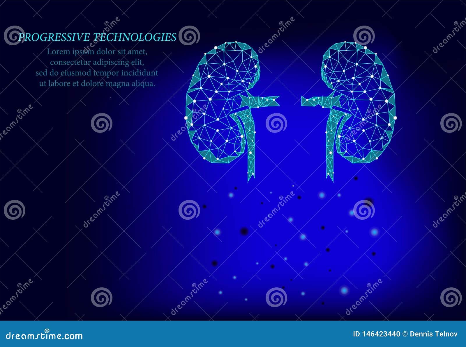 Gli uomini dell organo interno dei reni profilano il modello geometrico 3d Trattamento della medicina del sistema di urologia Tec