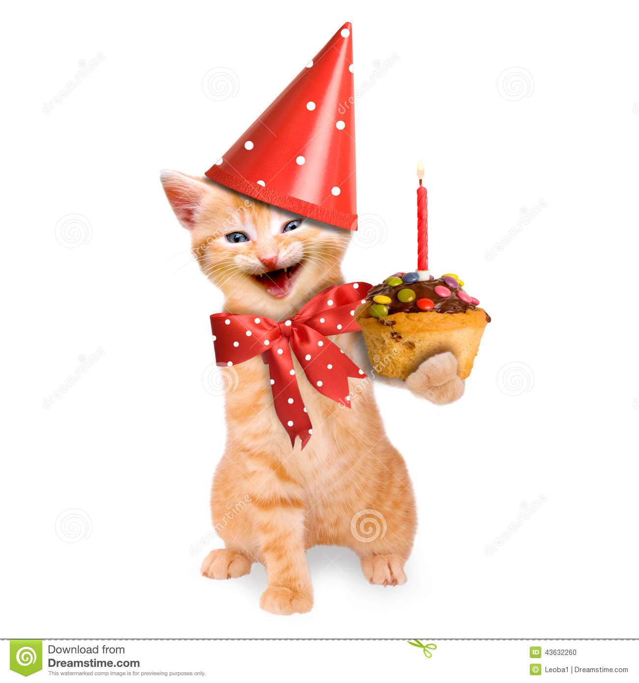 Happy Birthday Cat And Dog Images Free