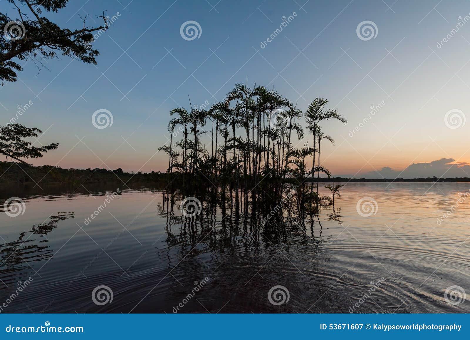 Palm Water Trees, Cuyabeno Wildlife Reserve, Ecuador