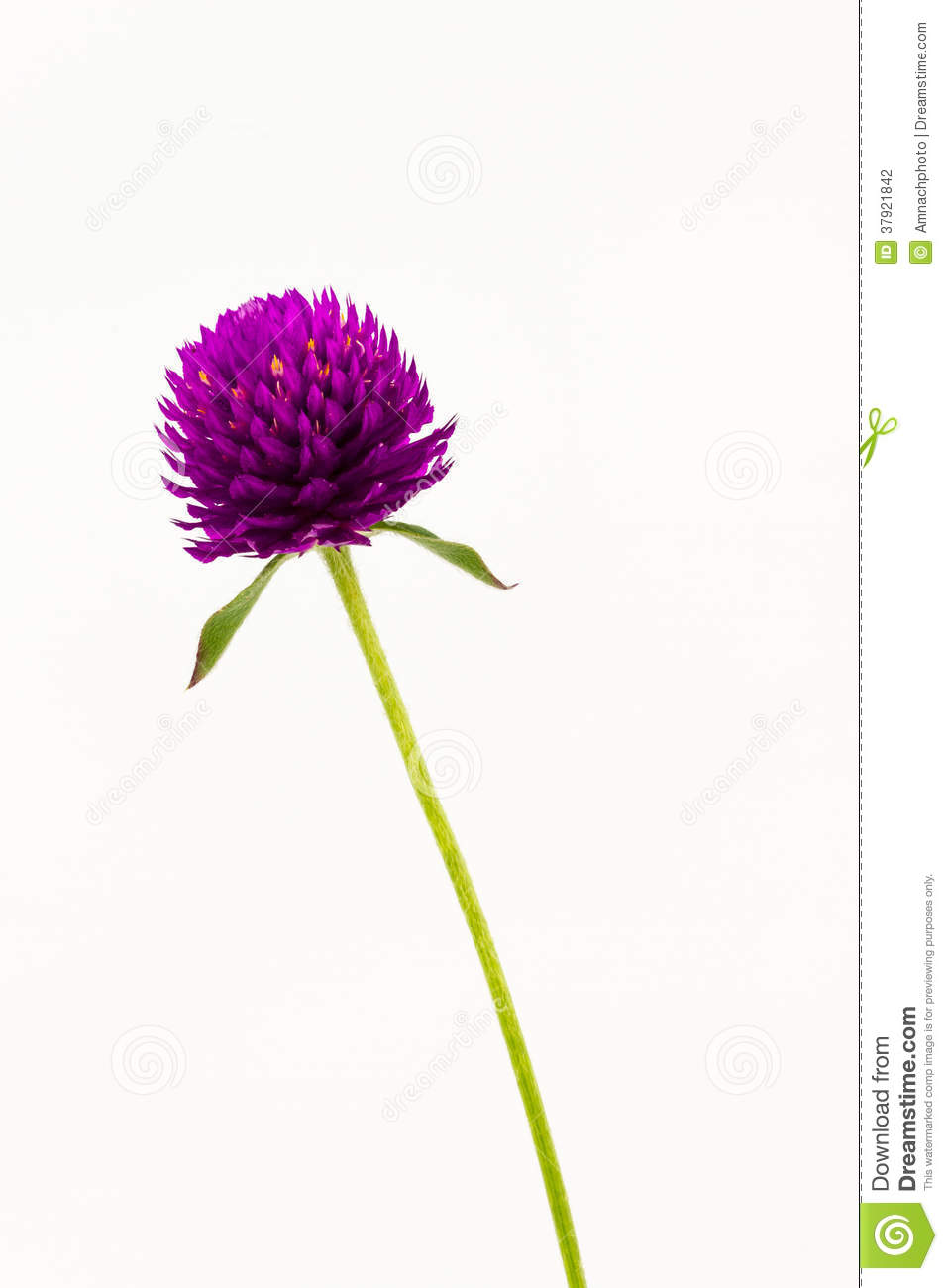 Plant Illustration Png