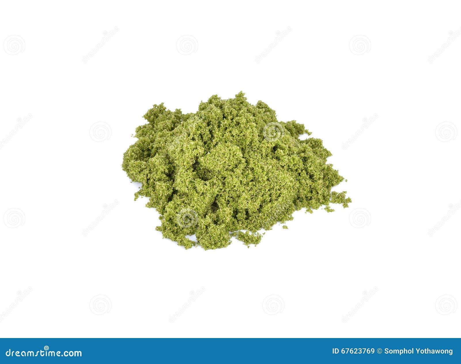 Globosa de Wolffia ou algue d eau douce, repas de l eau, algues de marais