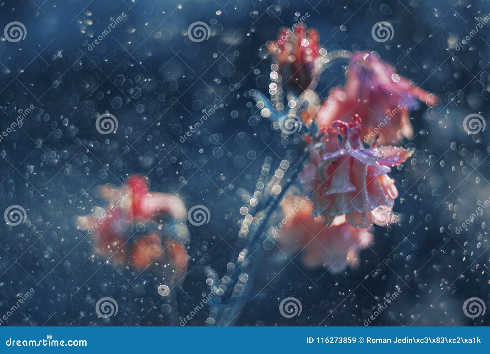 Glockenblume im blauen Regen