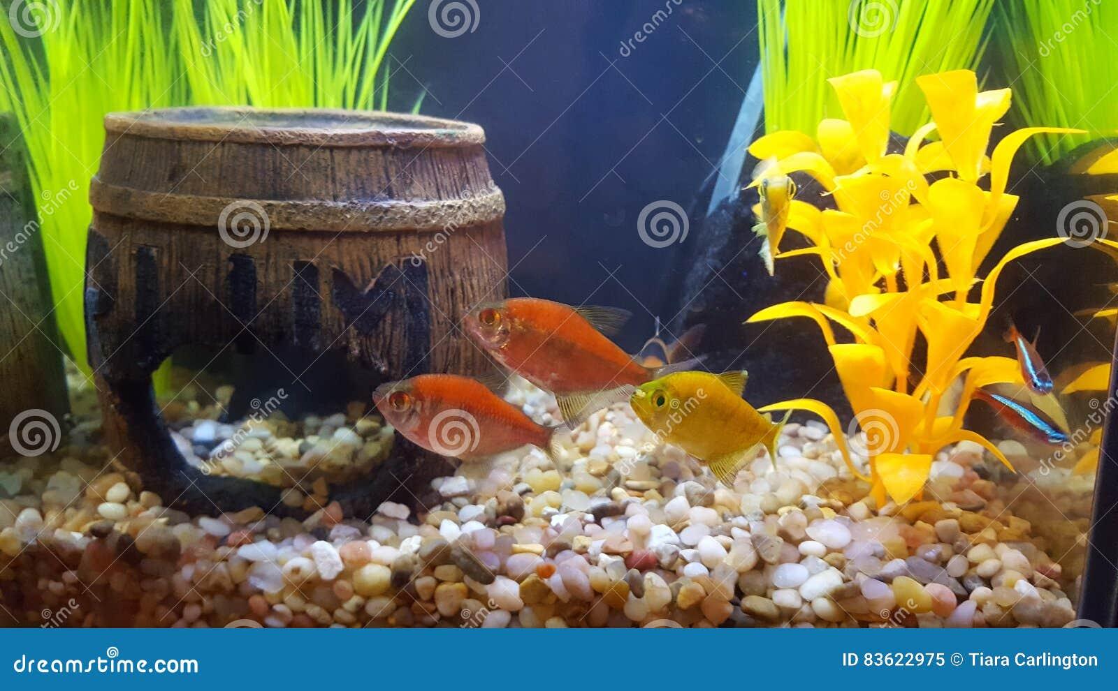 Glofish, δεξαμενή ψαριών