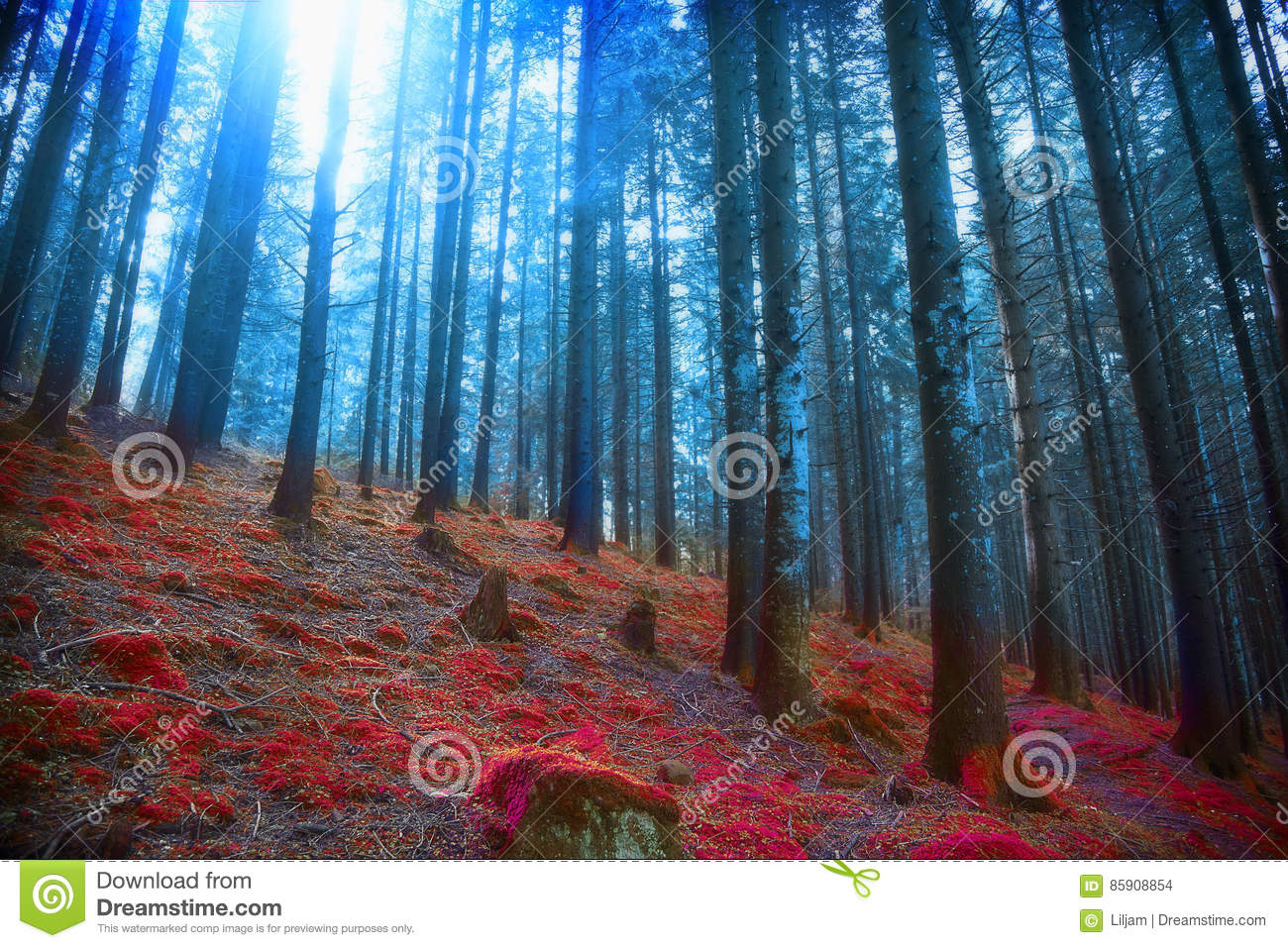 Gloomy surreal woods with lights and red moss, magic fairytale s