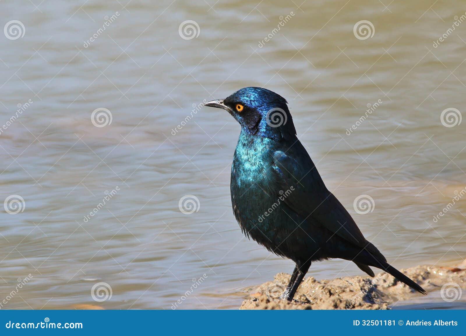 Wild Birds In Africa African wild birds