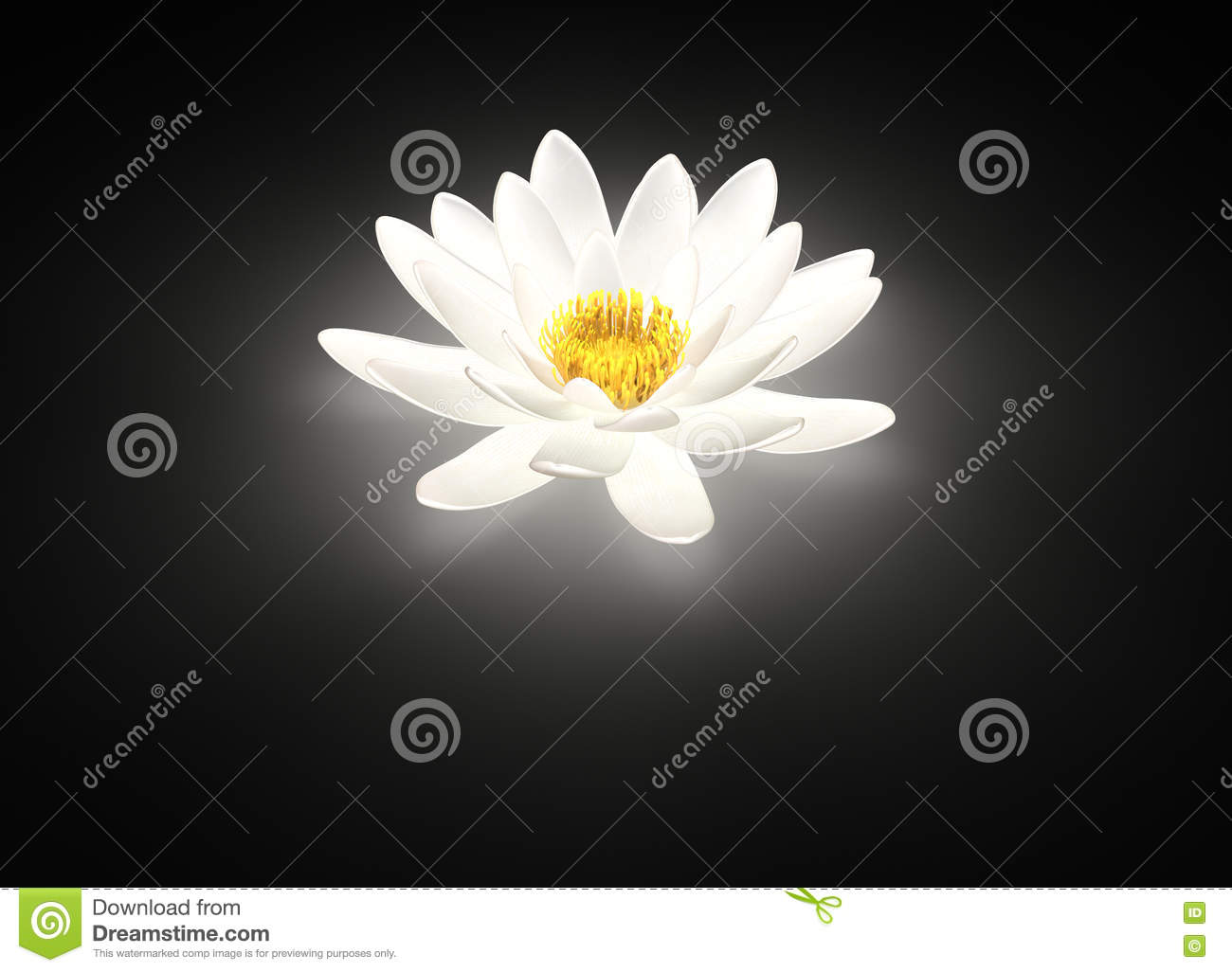 Glowing White Lotus Flower Water Lily Stock Photo Image Of Calm