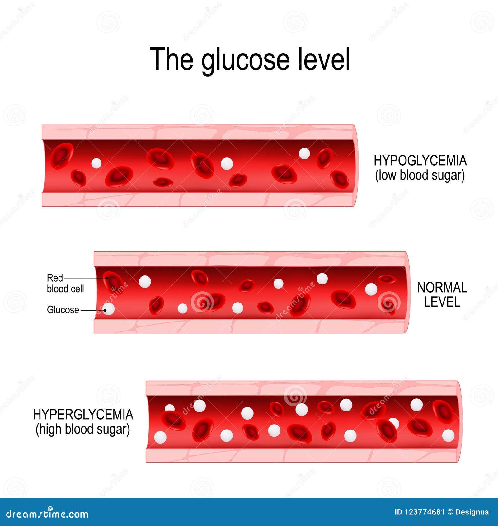 Glucosa En El Vaso Sanguíneo Ilustración del Vector - Ilustración de ...