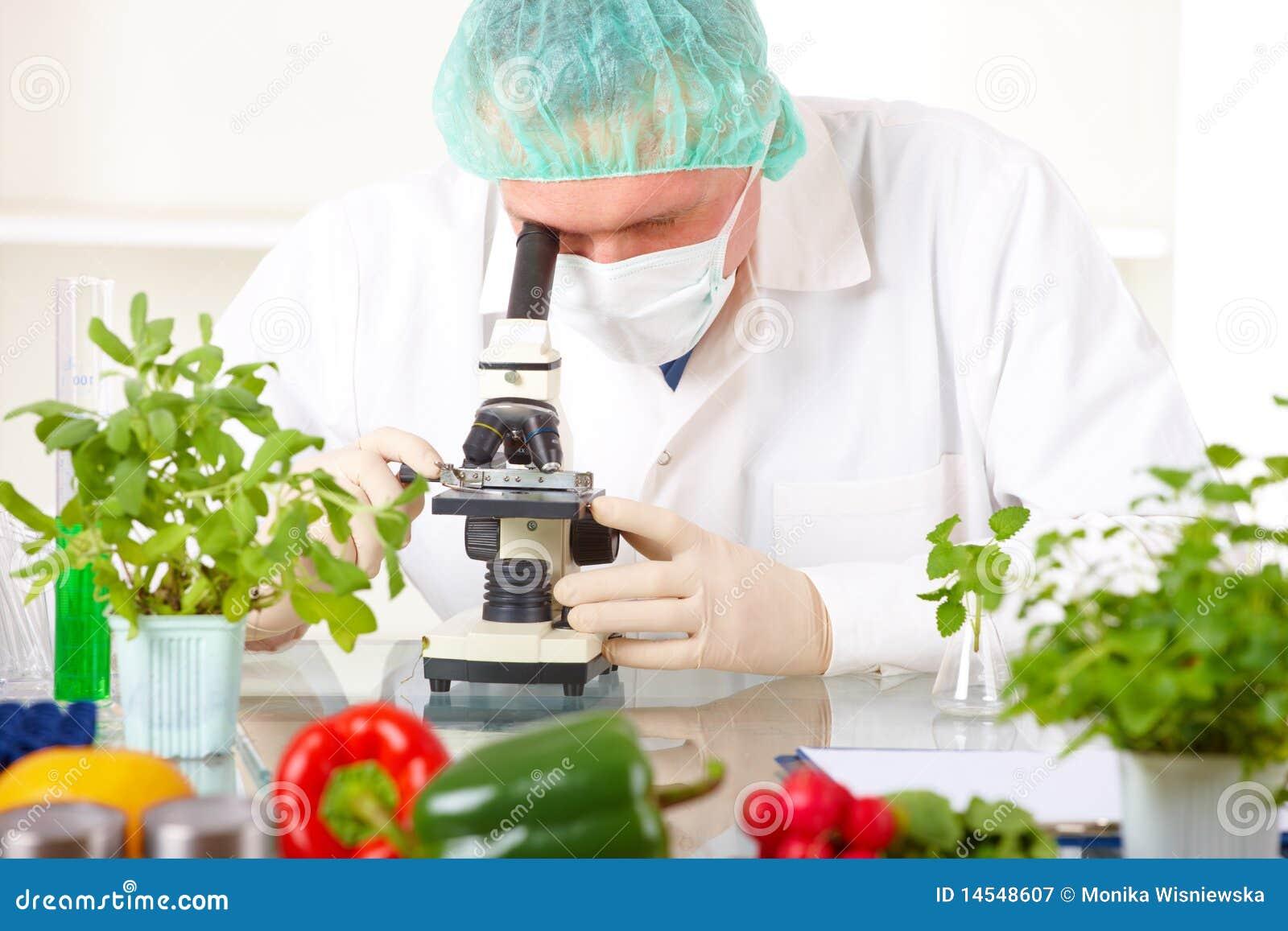 Gmo mikroskopu badacza warzywa