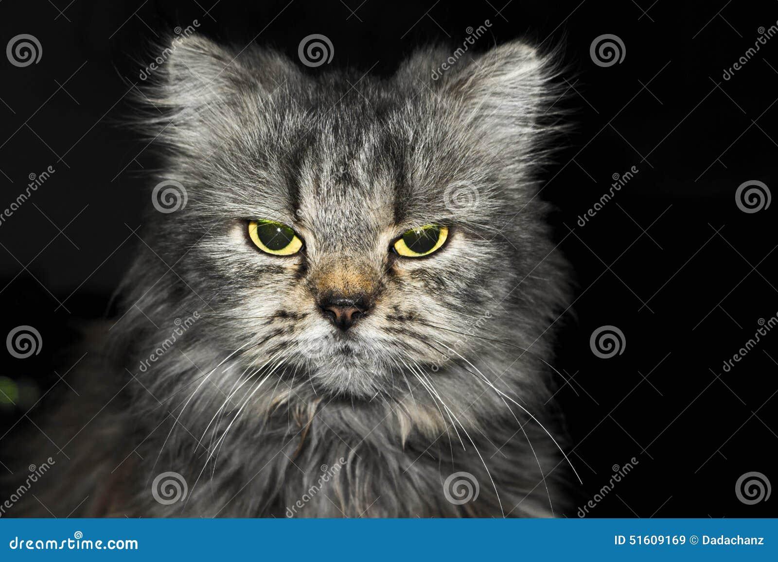 Gniewny kot