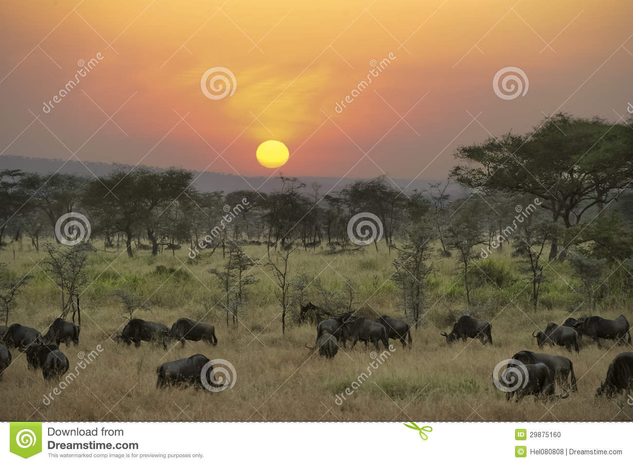 Wildebeests at sunset in Serengeti