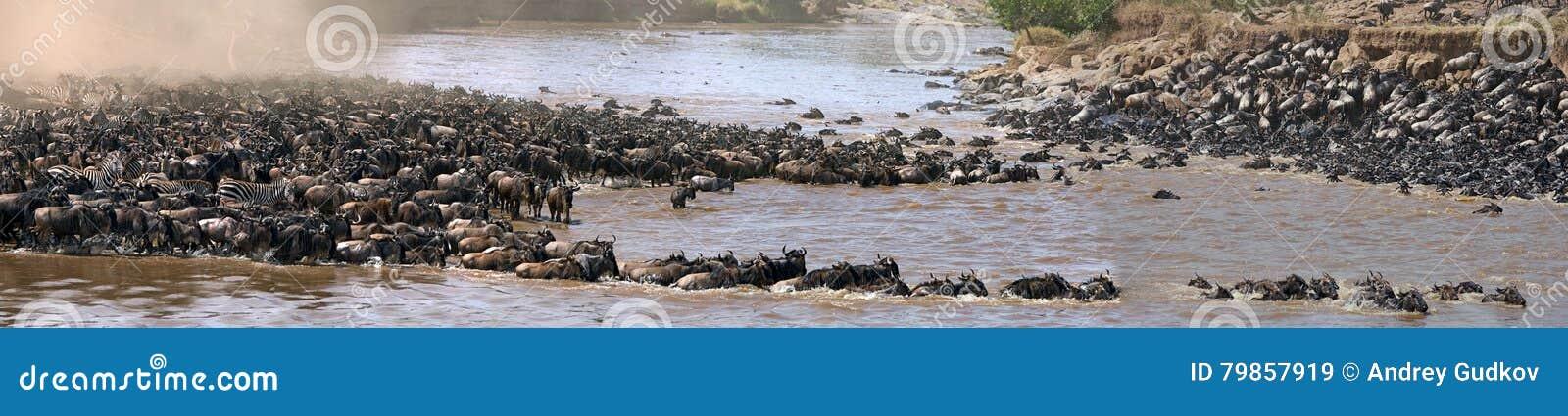 Gnus kreuzen Mara-Fluss Große Systemumstellung kenia tanzania Masai Mara National Park