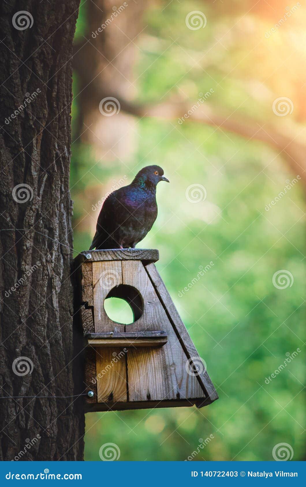 Gołąb siedzi na ptasim dozowniku w parku