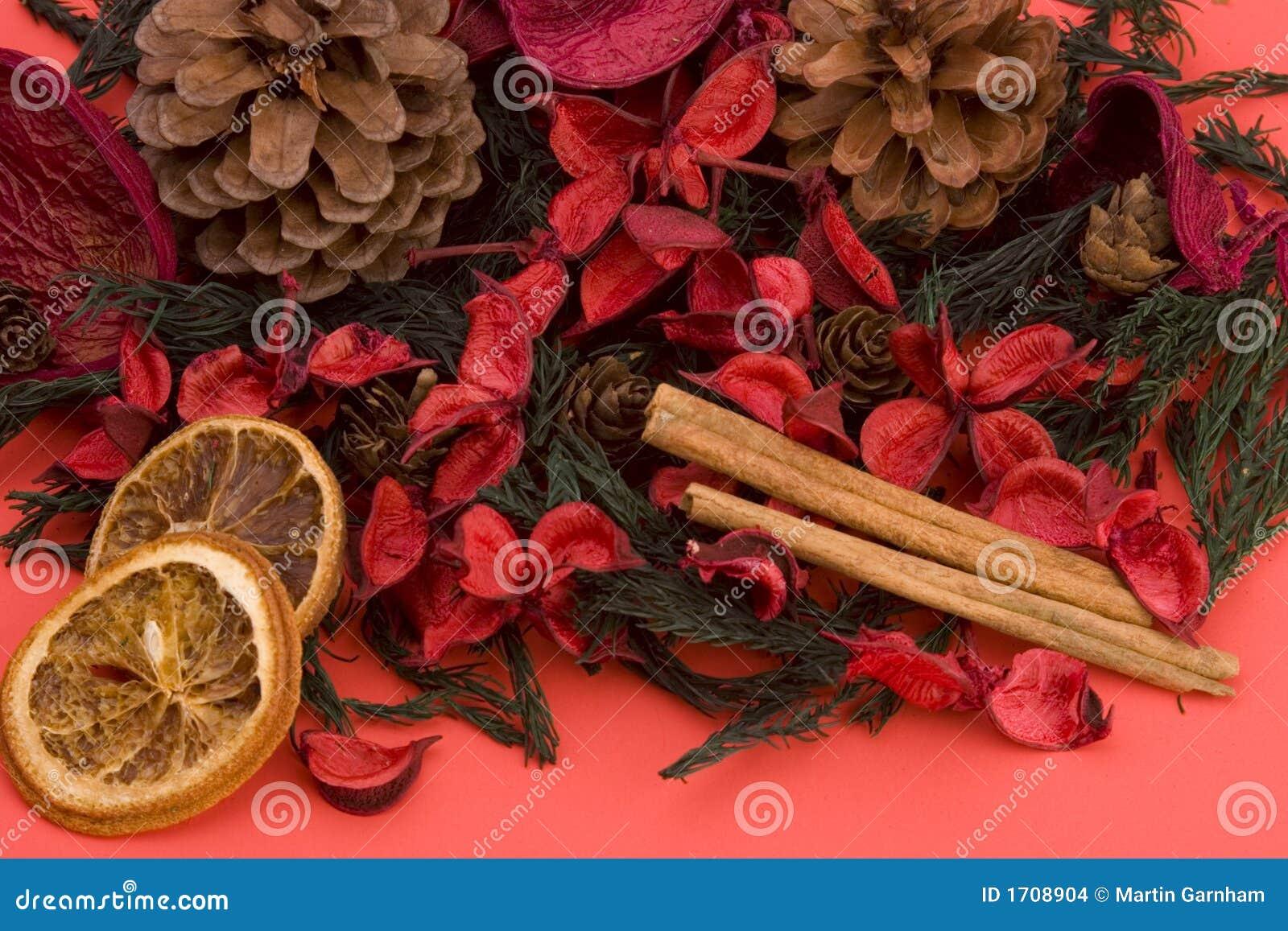 Goździki cynamonowa mandarynka