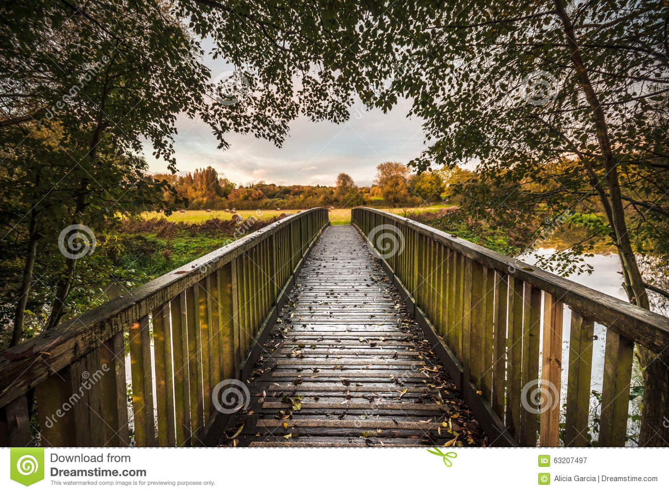 Go Ahead Cross The Bridge Stock Image Image Of Forest