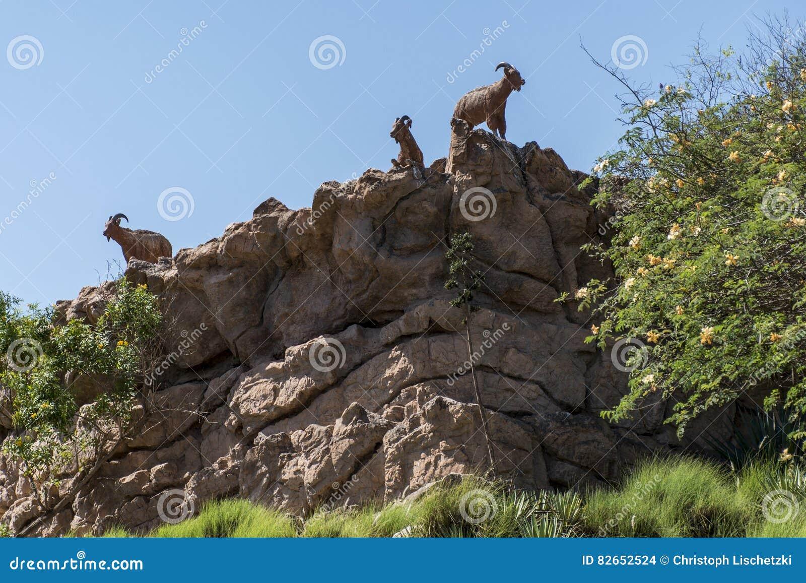 Goat at edge of a mountain in Oman salalah dhofar region 2