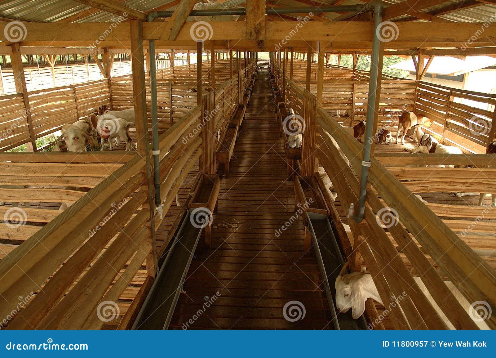 Goat farming business plan in malaysia