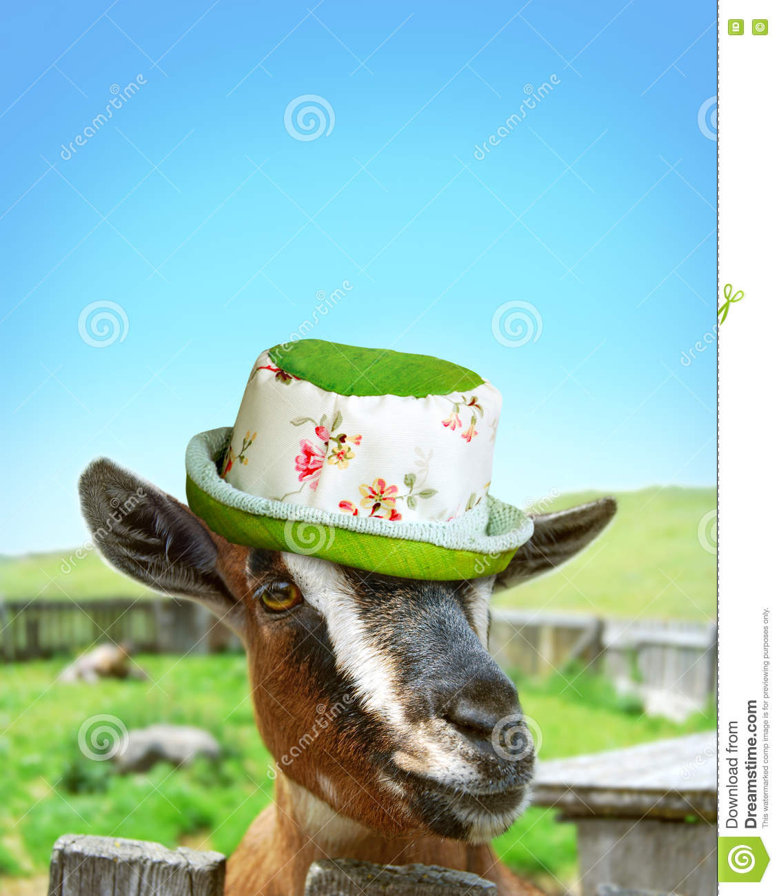 Goat with girly hat