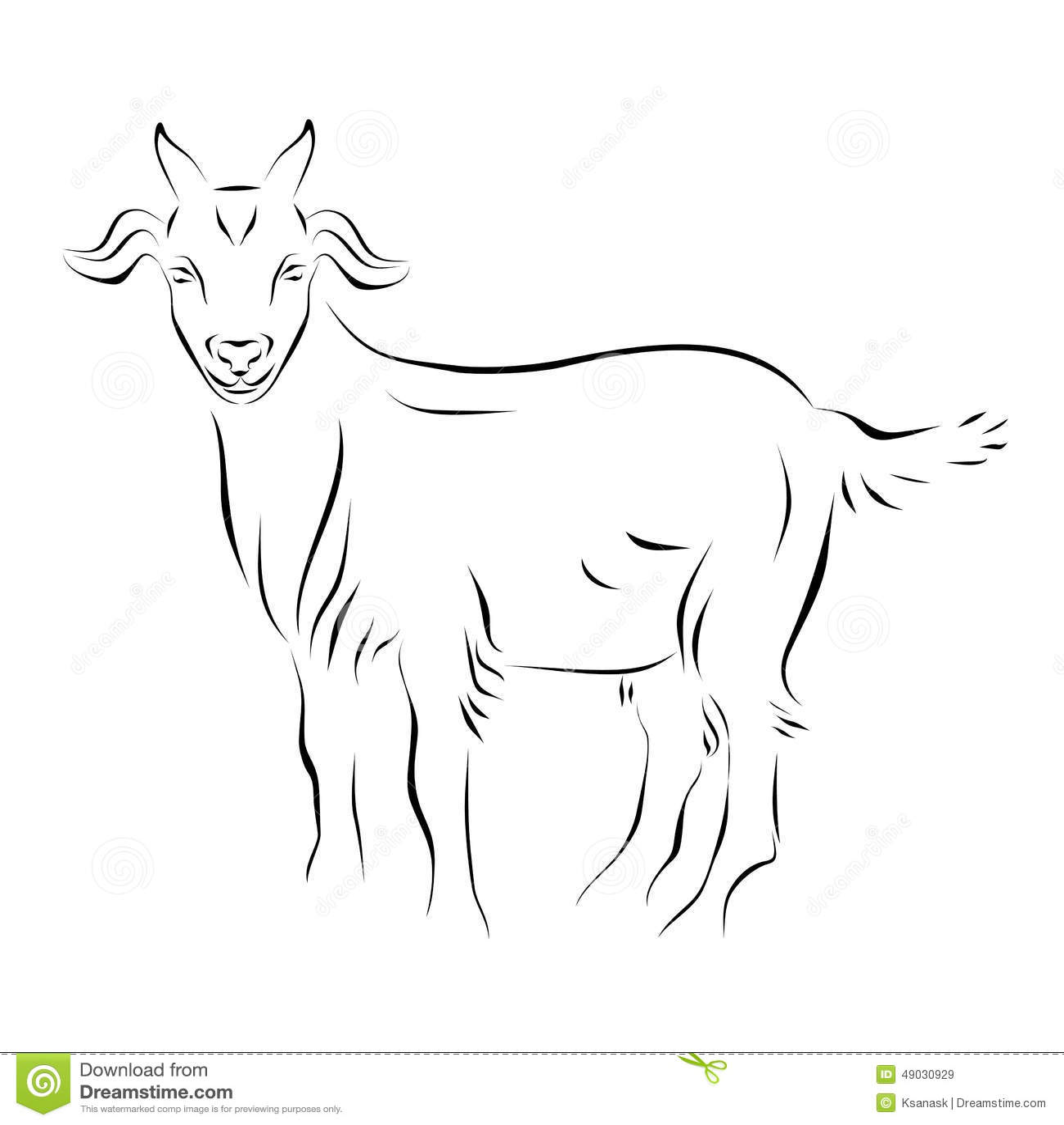 Line Drawing Goat : Goat ink line art stock vector image