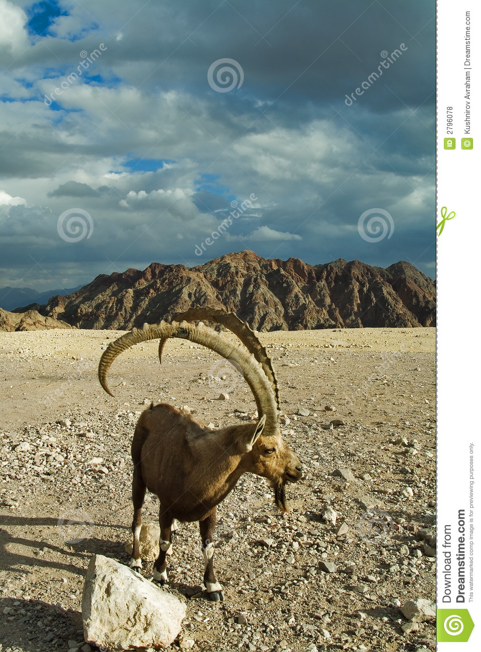 goat long horns royalty free stock photos image 2796078 man yawning clipart person yawning clipart