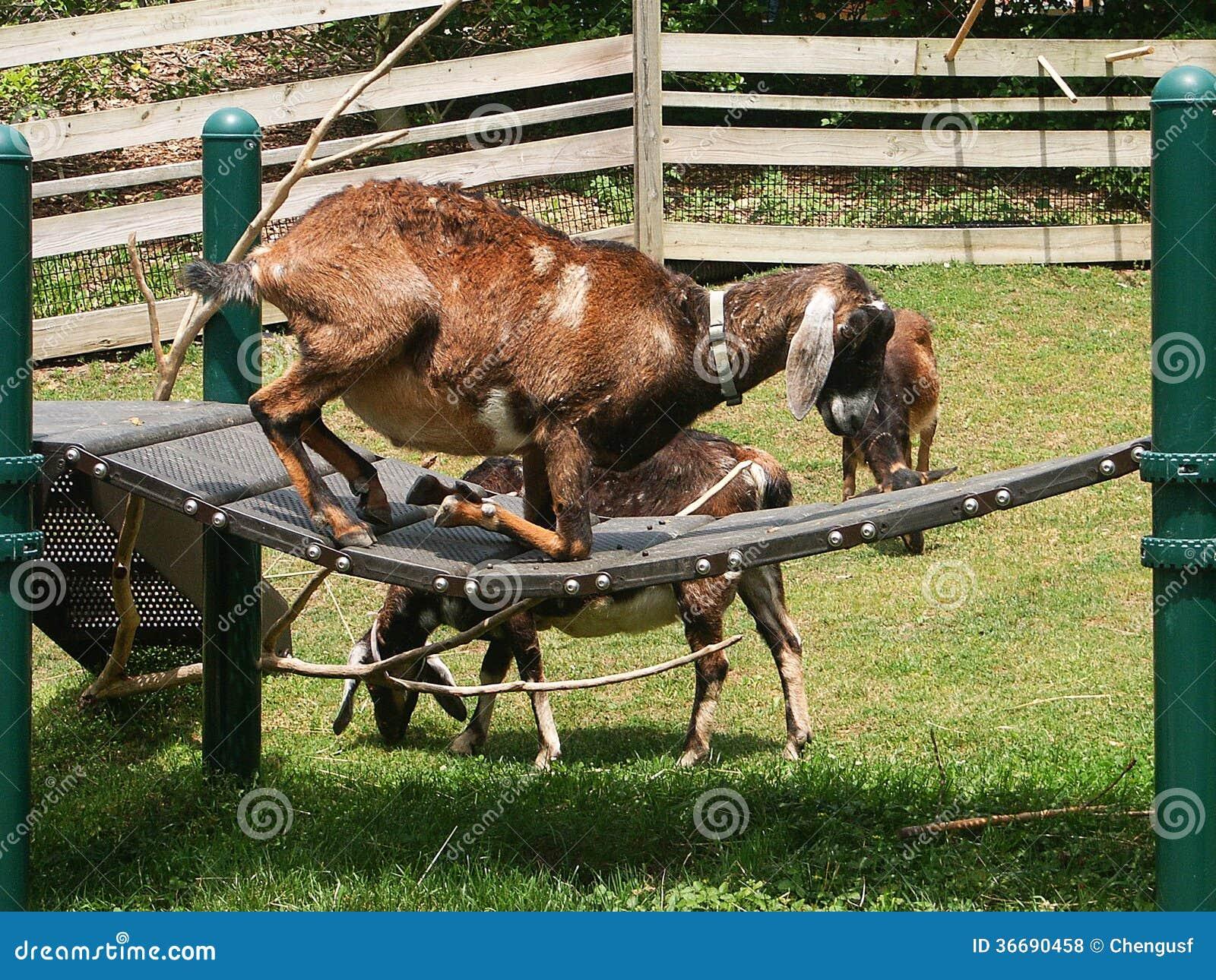 Animal Crossing Playground