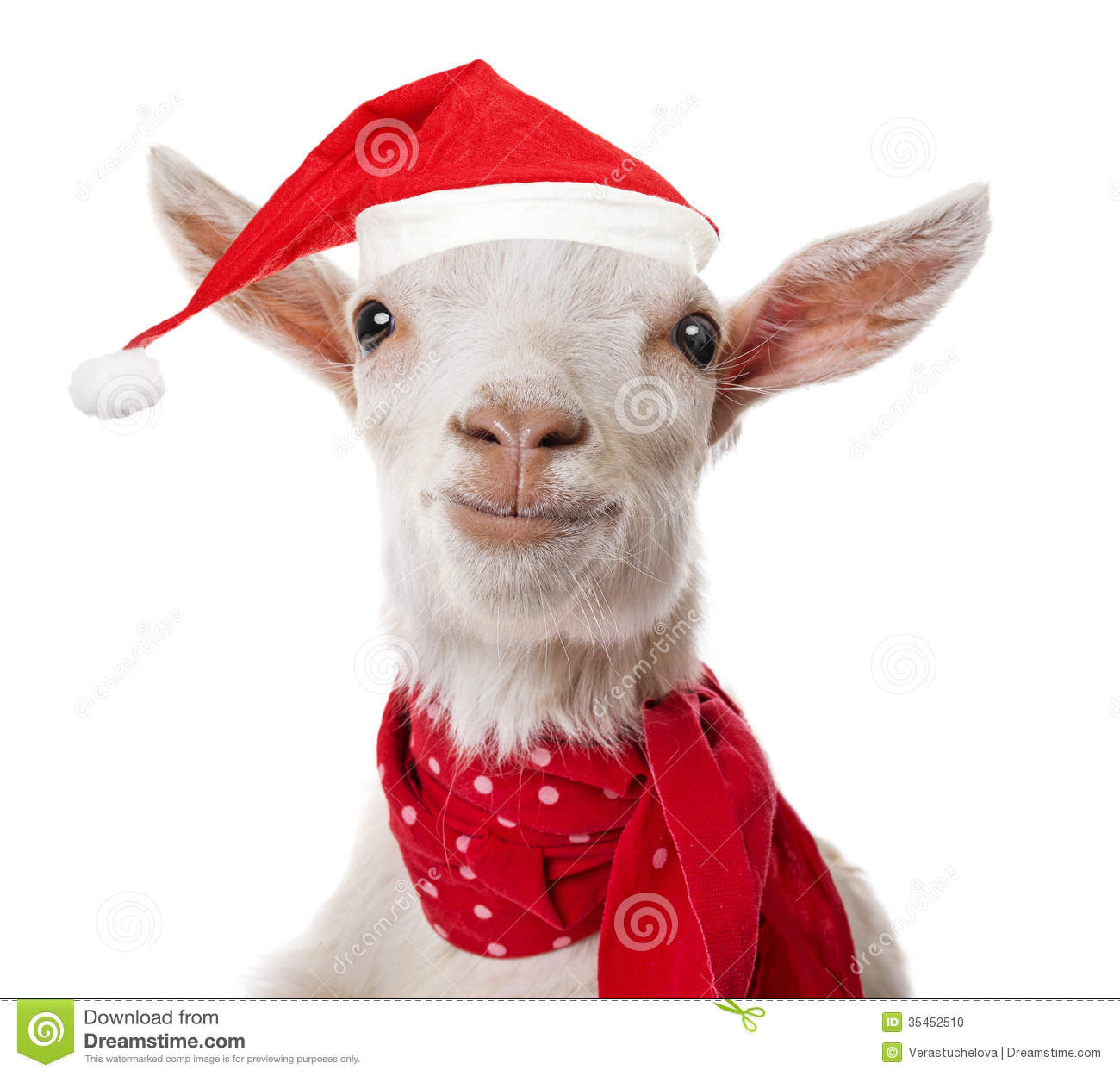 Goat with a red santa cap stock photo image of imagine