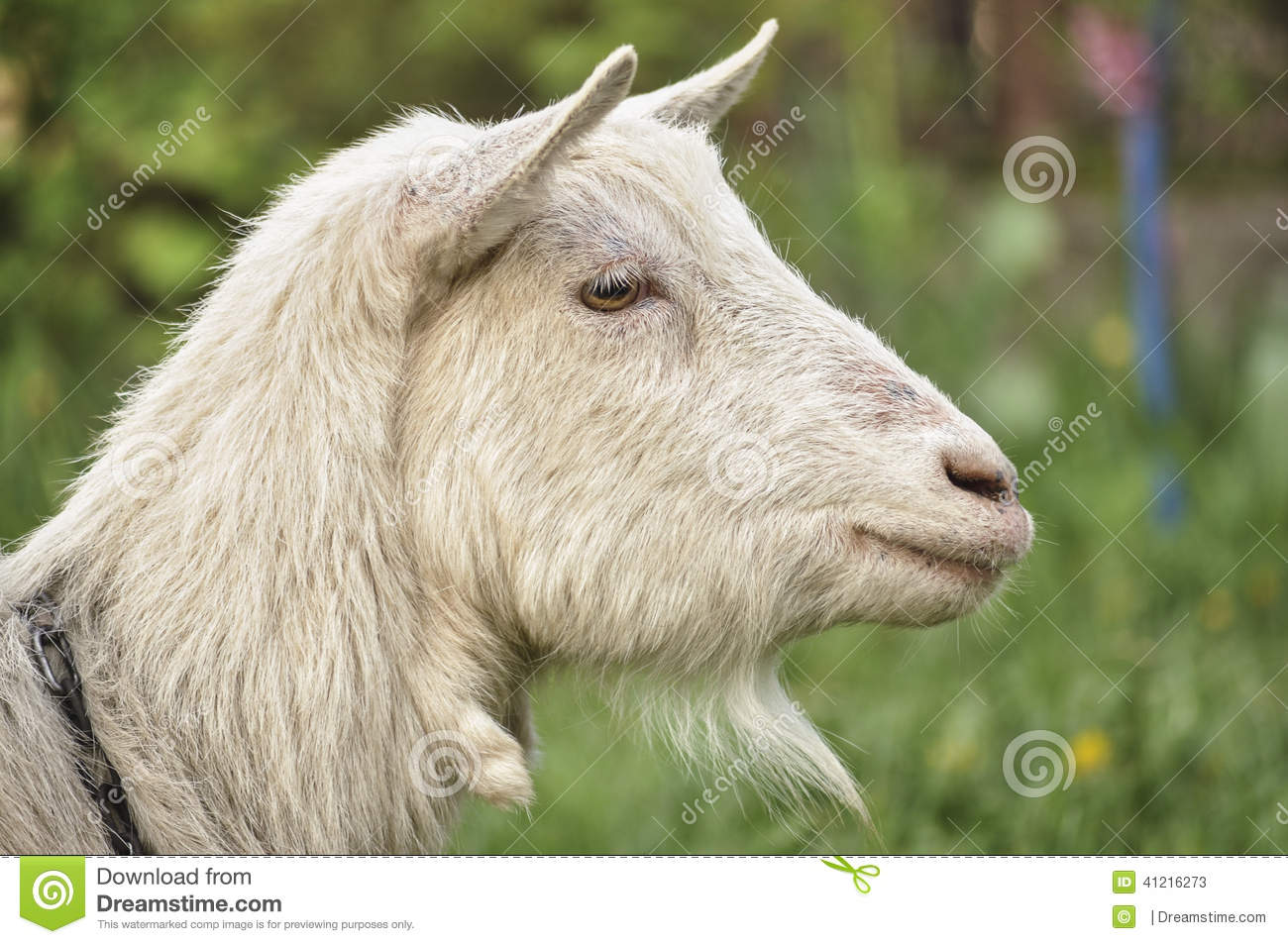Goats Profile Stock Image Of Board Eyes