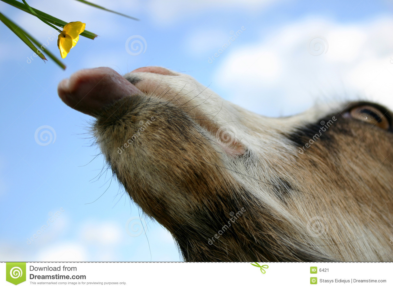 A goat: It s time to eat!
