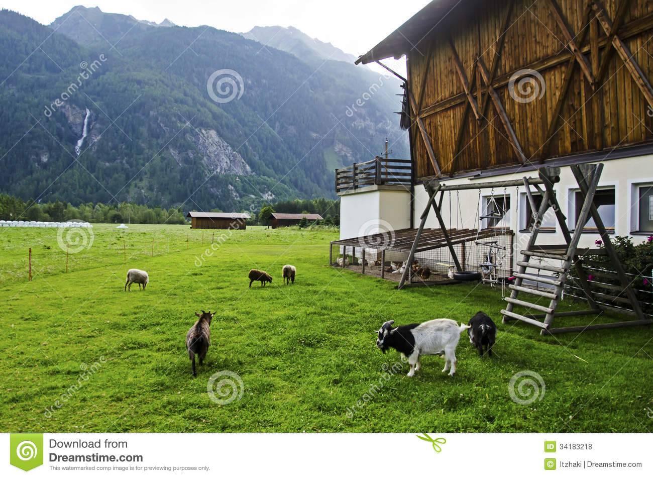 Goat And Sheep In The Farm Stock Photo Image Of Barn