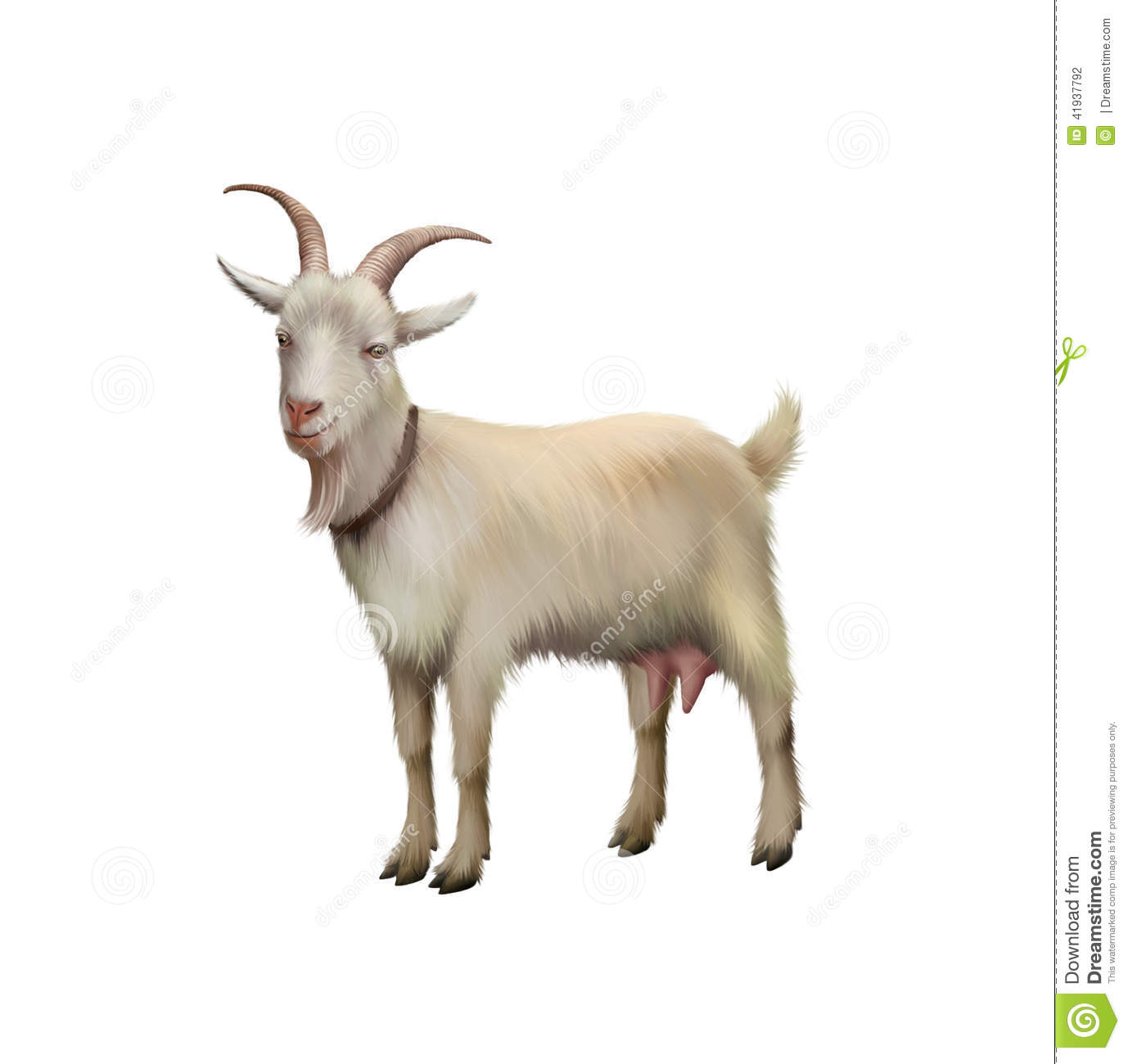 Goat Standing Up Isolated On A White Background Stock Illustration ...