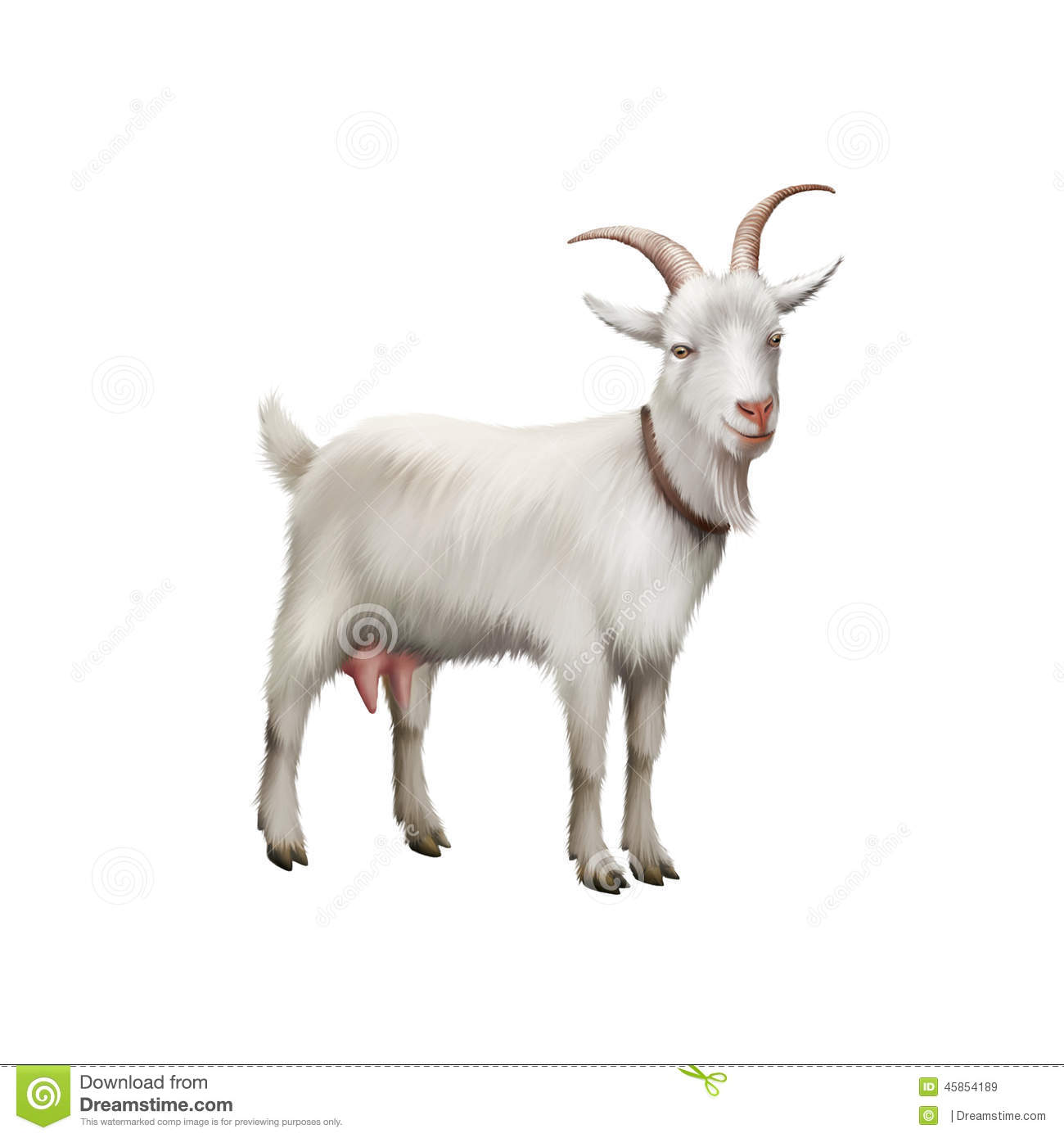 Goat Standing Up Isolated On A White Background Stock ... One Goat White Background
