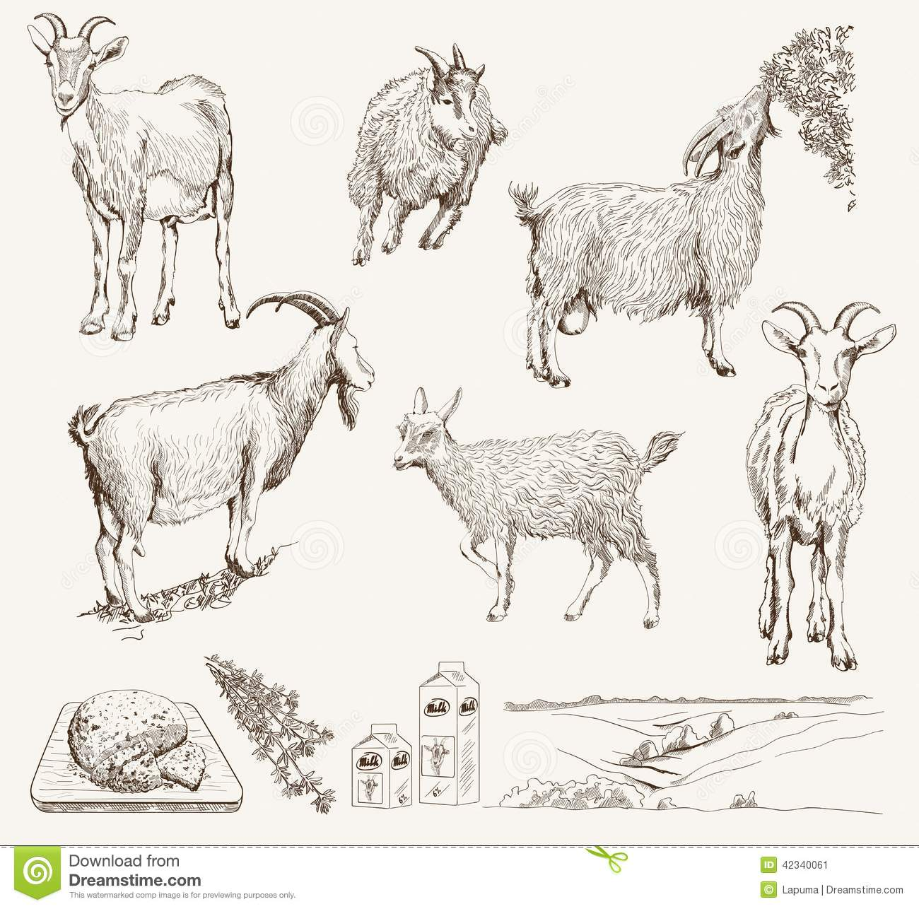 Goat Vector Hand Drawn Stock Image