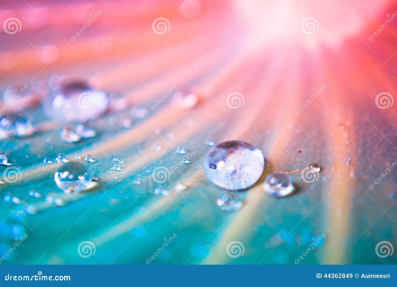Gocce dell acqua sul foglio del loto
