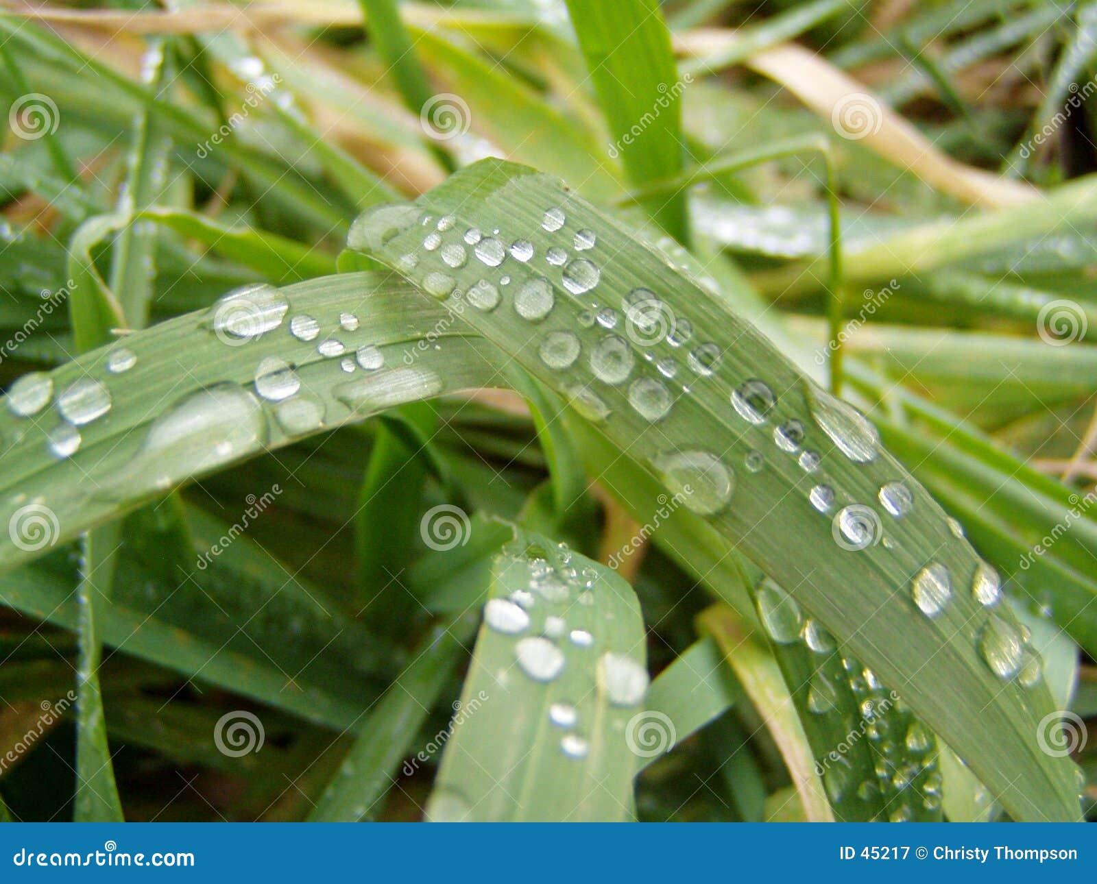 Gocce di pioggia su erba