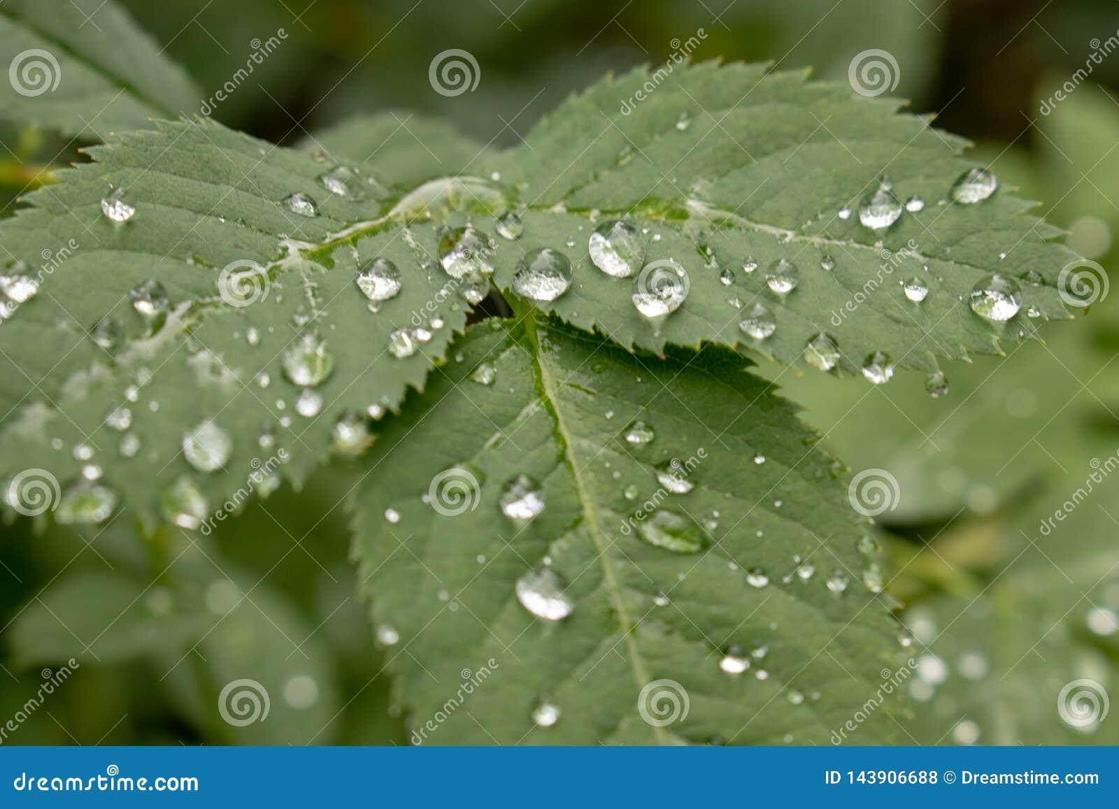 Gocce di pioggia sui fogli