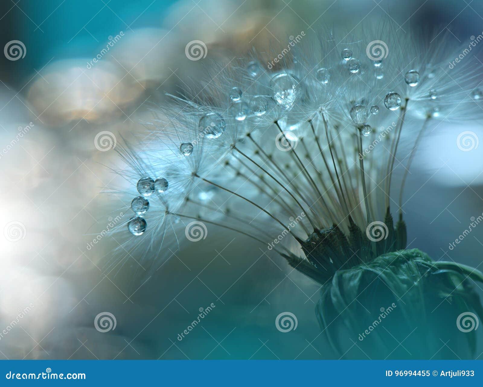 Gocce sul primo piano floreale del fondo Fotografia astratta tranquilla di arte del primo piano Stampa per la carta da parati Pro