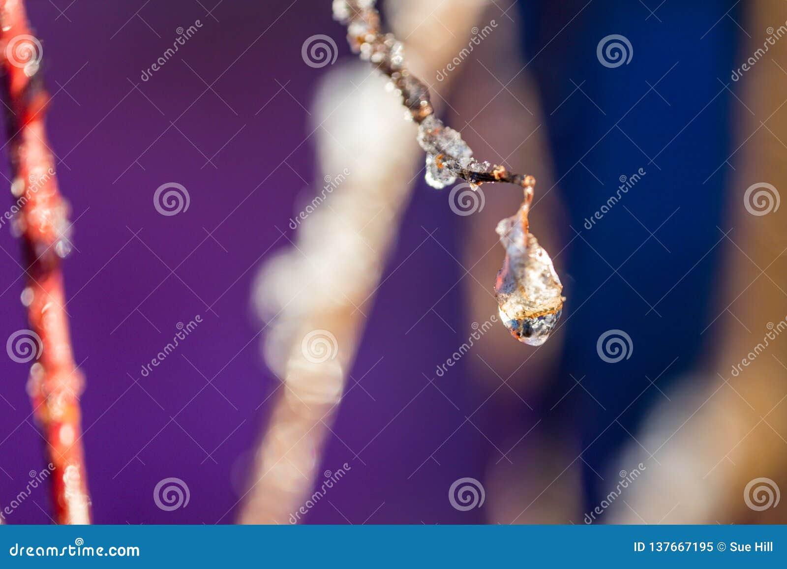 Goccioline di acqua glassate su un ramoscello