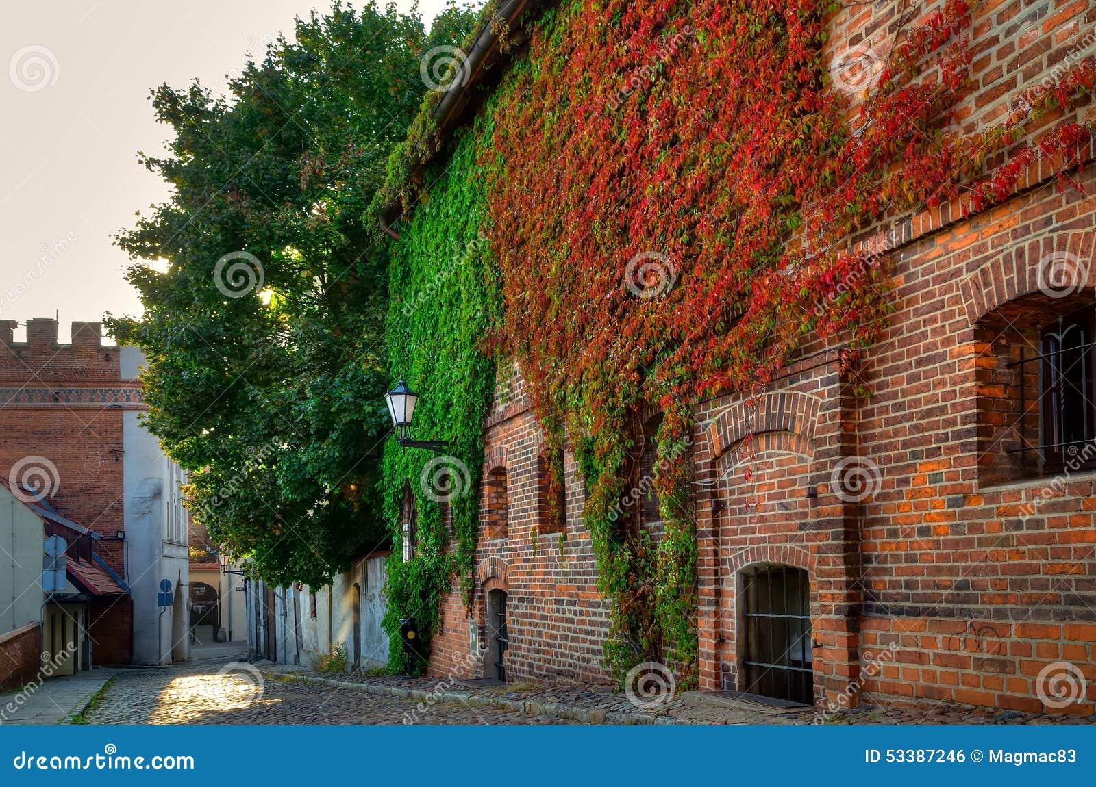 Gocki budynek przerastający z bluszczem, stary miasteczko w Toruńskim, Polska