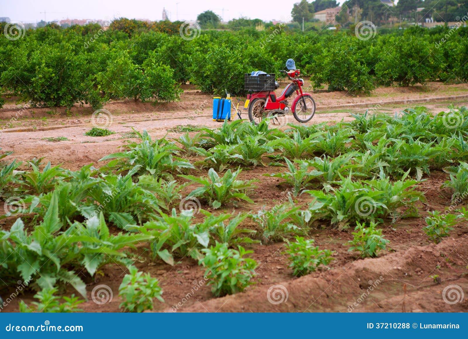 Godella Valencia field smallholding traditional agriculture