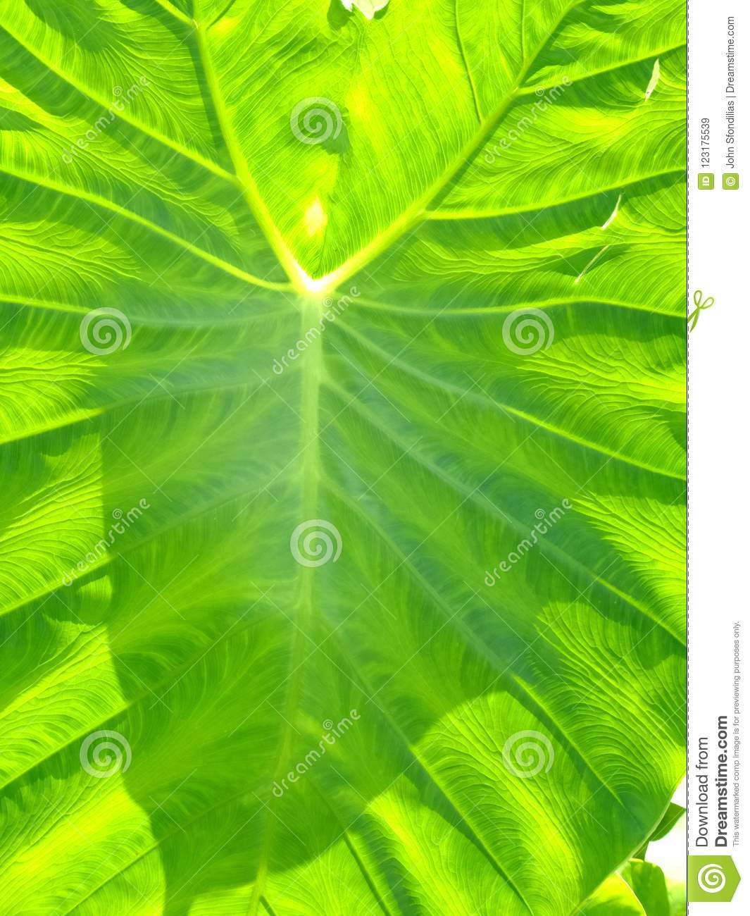 Download Going Green stock image. Image of capillary, transport - 123175539