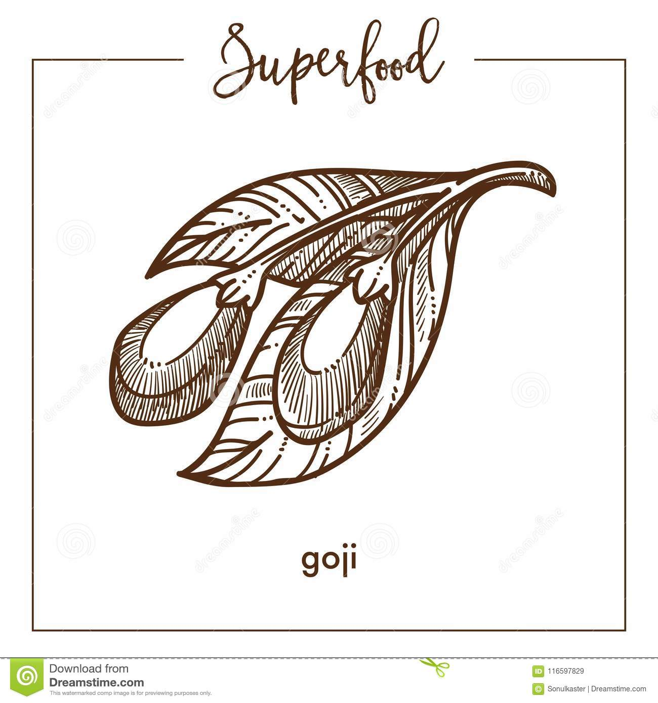 Goji Berries With Leaves Monochrome Superfood Sepia Sketch Stock